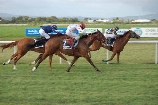 imagescourse-de-chevaux-2.jpg